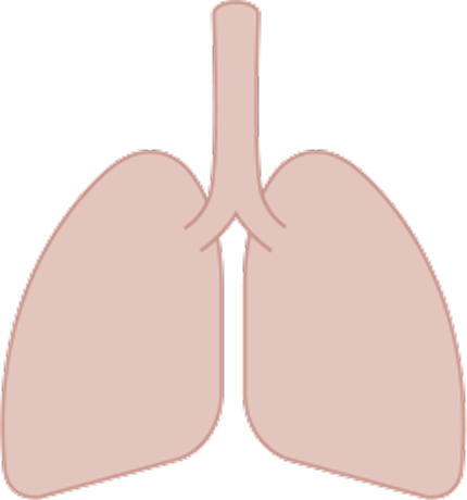 Lungs with cancer